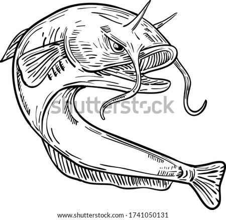 Devil Catfish Jumping Drawing Black and White Stock photo © patrimonio