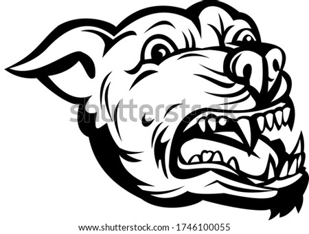 Head of Angry Pit Bull or Pitbull Barking Retro Black and White Stock photo © patrimonio