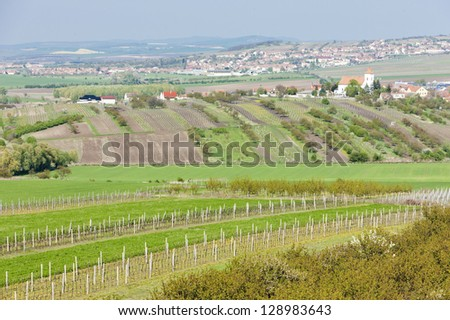 view of vineyards from lookout tower of kravi hora near boretice stock photo © phbcz
