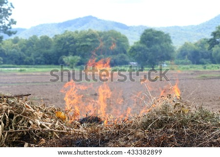 Fire burning dried grass field caused air pollution and global w Stock photo © JohnKasawa