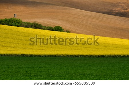Green wheat in cultivated field as abstract agricultural backgro Stock photo © stevanovicigor