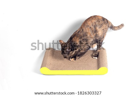 Cat in box white texture. Pet in cardboard box background. vecto Stock photo © MaryValery