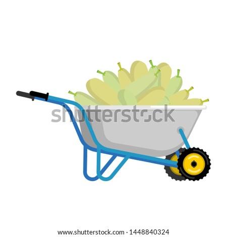 Talicska cukkini zöldségek kert nagy aratás Stock fotó © popaukropa