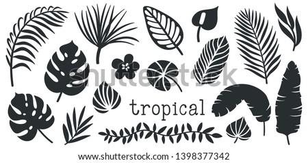 Foto stock: Verão · praia · palms · plantas · desenho · animado · vetor