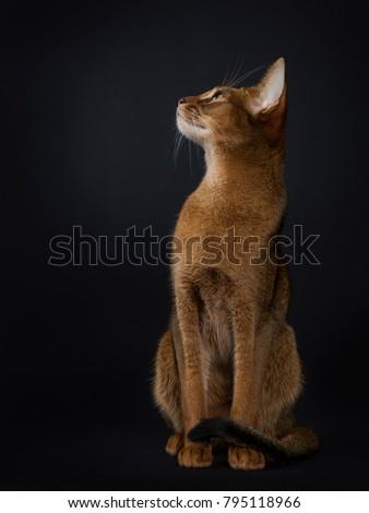 猫 · 座って · ストレート · アップ · 向い · サイド - ストックフォト © CatchyImages