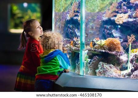 pequeno · menino · menina · assistindo · tropical · coral - foto stock © galitskaya