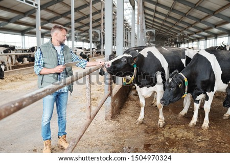 One of milk cows in cowshed touching hand of male worker standing by fence Stock photo © pressmaster