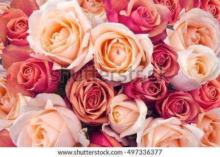 ロマンチックな 高級 花束 ピンク バラ 花 ストックフォト © Anneleven