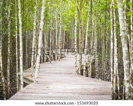 Wooden bridge in rain mangrove forest jungle Stock photo © dmitry_rukhlenko