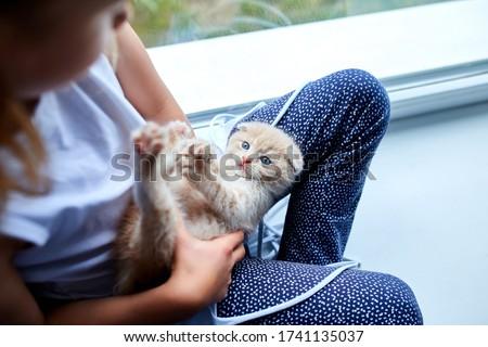 Dziecko dziewczyna brytyjski mały kotek Zdjęcia stock © Illia