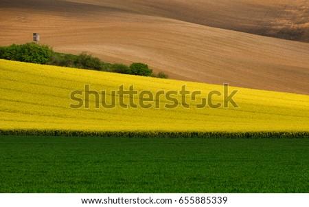 Zöld búza megművelt mező absztrakt mezőgazdasági Stock fotó © stevanovicigor