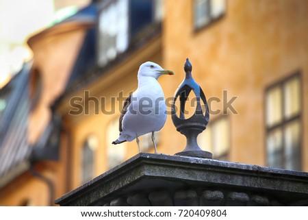 seagull on top of statue jarntorgspumpen in gamla stan stockhol stock photo © vladacanon