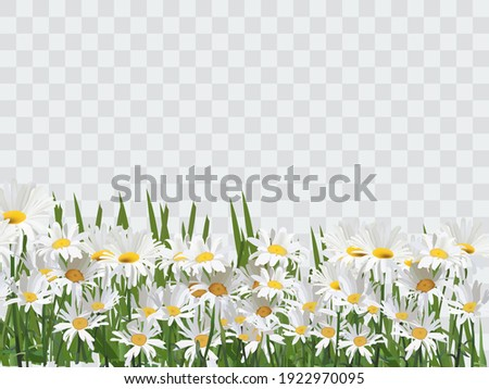 Summer Sale lettering and bouquet realistic daisy, camomile flowers on green background, online shop Stock photo © ikopylov
