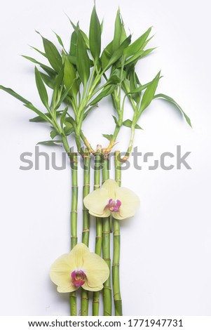 Stock photo: Lucky Bamboo and two orchid flowers on natural green background