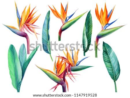 Modèle oiseau paradis fleur tropicales usine Photo stock © Margolana