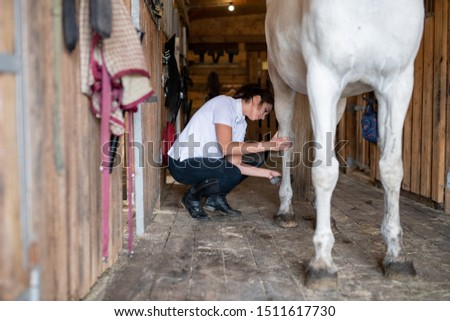 Young woman in skinny jeans and white shirt using brush to clean legs of horse Stock photo © pressmaster