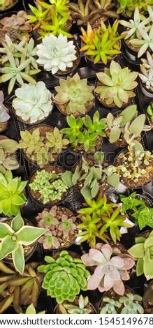 Abstract succulente impianti texture Foto d'archivio © feverpitch