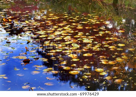 Lily Pads Fall Colors Water Reflections Van Dusen Gardens Vancou Stock photo © billperry