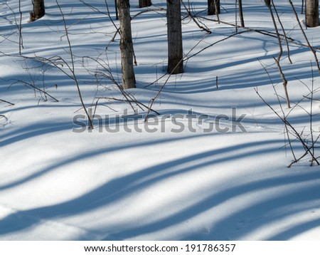 Bushes on a snow covered landscape, Orangeville, Dufferin County Stock photo © bmonteny
