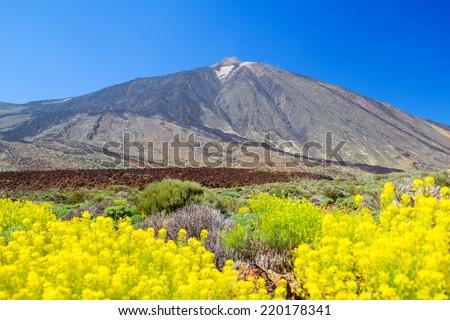 Teide volcano peak with yellow flowers in the foreground, Teneri Stock photo © tuulijumala