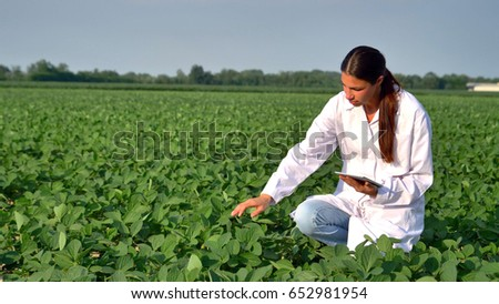 agronomist checking small soybean plants in cultivated agricultu stock photo © stevanovicigor