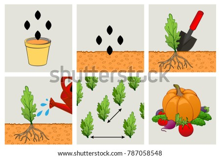 Circuit planting seeds. Technics of agriculture cultivation of seedlings Stock photo © orensila