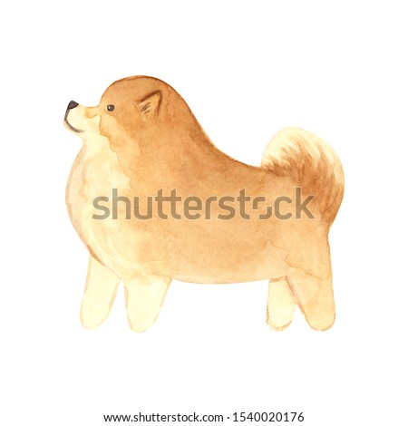 Watercolor portrait of dog pomeranian spitz with golden crown Stock photo © Natalia_1947