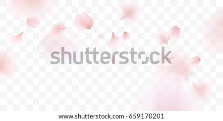 Pink sakura flower falling petals vector transparent background. 3D romantic valentines day Stock photo © Iaroslava