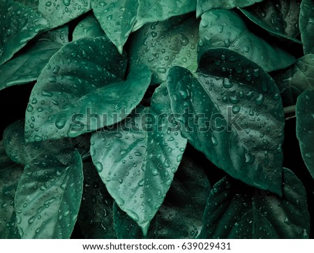 abstract dark green of tropical plant and green leaf after rain stock photo © galitskaya