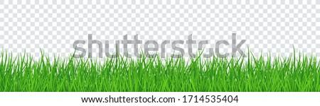 Hierba verde frontera establecer transparente primavera naturaleza Foto stock © olehsvetiukha