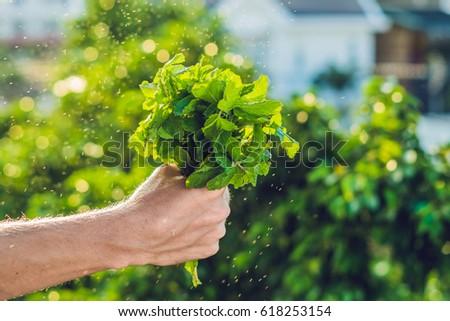 Köteg menta kéz csobbanás víz zöld Stock fotó © galitskaya