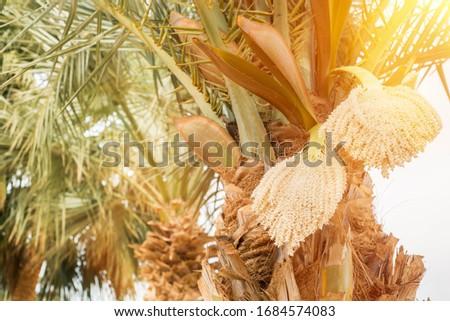 Closeup tropical fruit on blurred ocean or palm trees background Stock photo © ElenaBatkova