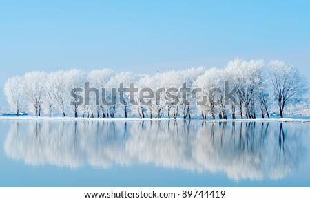 Winter landschap meer boom vorst vallen Stockfoto © AlisLuch