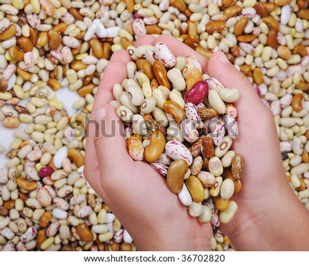 Many pieces and many kind of beans in hands, wallpaper, pattern Stock photo © zurijeta
