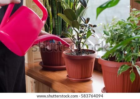 Stockfoto: Vrouw · plant · pot · gieter · schets