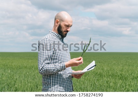 agriculture farmer examining wheat and rapeseed plants in field stock photo © simazoran