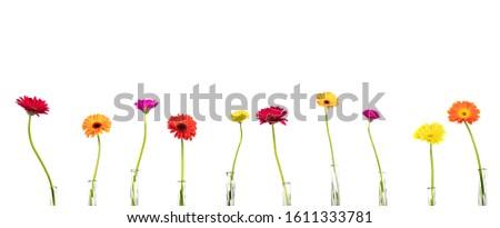 Creativa hermosa patrón de flores aislado tendencia color Foto stock © artjazz