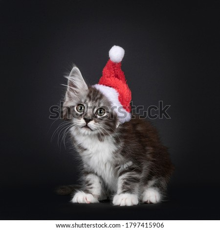 Red silver Maine Coon cat kitten sitting isolated on white background  stock photo © CatchyImages