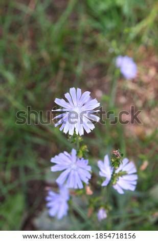 цветения завода цветок фон лет Сток-фото © Virgin