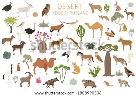 Set of desert road Stock photo © bluering