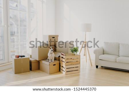 Cute huiselijk hond karton dozen Stockfoto © vkstudio