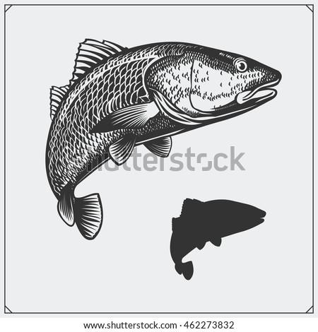 Forel vis springen uit water retro Stockfoto © patrimonio
