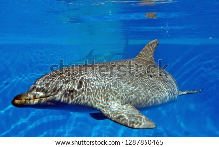 スイミングプール 画像 水面 美しい 青 ストックフォト © 3523studio