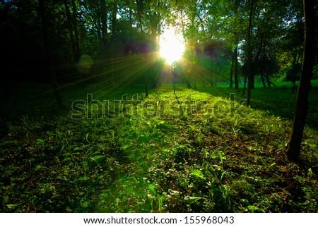 Dappled sunlight breaking through tall trees onto a path through a wood Stock photo © Geribody