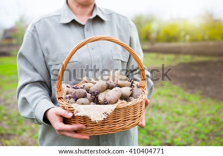close up of germinating potatoes in basket in the woman farmer h stock photo © yatsenko