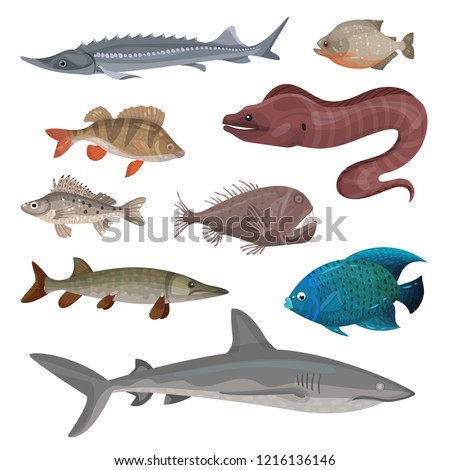 set of colorful moray eels isolated on white background vector cartoon close up illustration stock photo © lady-luck
