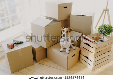 Top view of domestic animal dog poses on cardboard boxes with personal stuff, poses in flat where re Stock photo © vkstudio