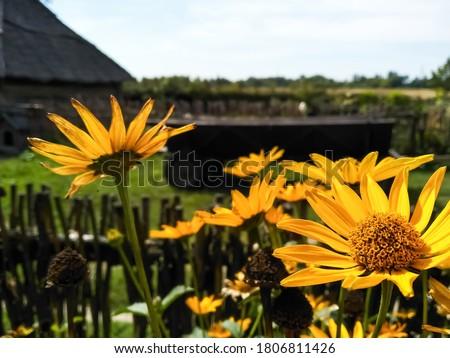 żółte kwiaty niebieski lata niebo internetowych banner Zdjęcia stock © neirfy