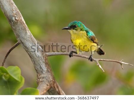 女性 · 支店 · 鳥 · アフリカ · プロファイル · マラウイ - ストックフォト © davemontreuil