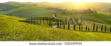ağaçlar · yol · Toskana · İtalya · mavi - stok fotoğraf © photocreo